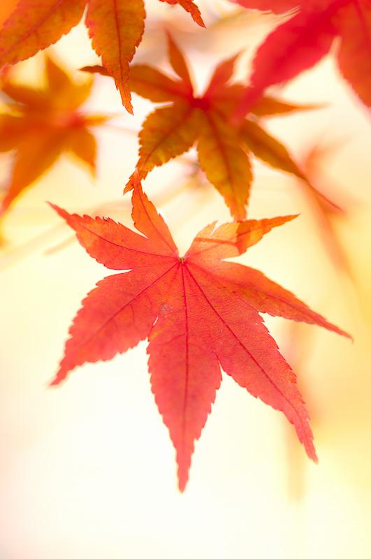 Leaf Pressing